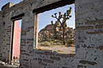 joshua tree in window